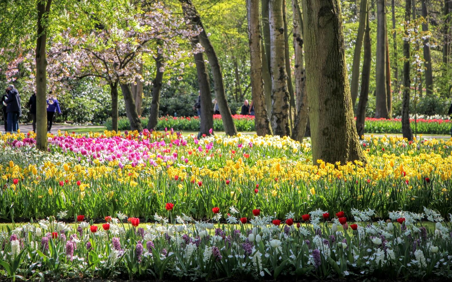 Amsterdam-Tulips-15
