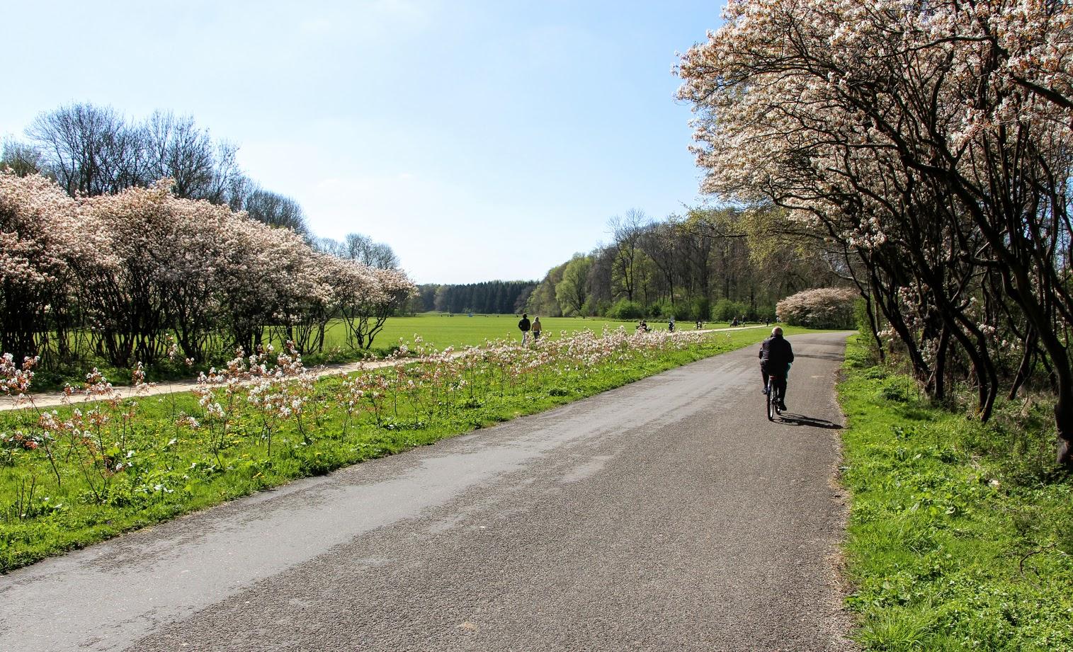 Amsterdamse-Bos-3