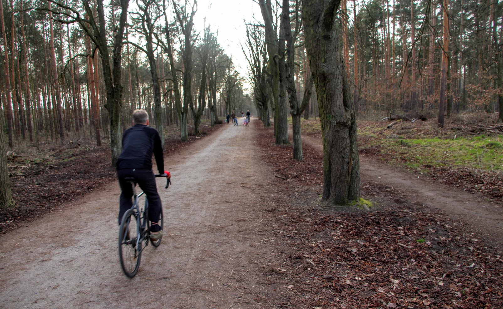 Grunewald Berlin Biking The Great Forest Of The German Capital