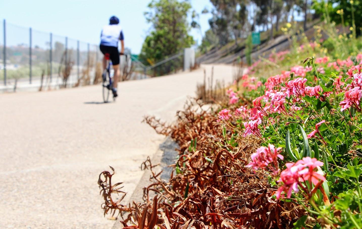 highway-56-bike-path-6